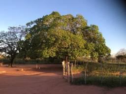 Fazenda em São João do Jaguaribe