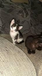 Doando 5 gatinhos fofinhos