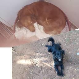 Cachorro as primeira foto do país não está a venda só os filhotes.