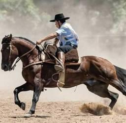 Cavalo top de função!!!!!