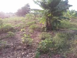Alugo uma área no distrito industrial 60x60 toda irrigada