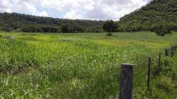 Fazenda 600ha no MS - pecuária de engorda