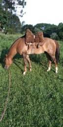 Vende - se Cavalo Crioulo