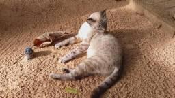 Adoção gatinha linda