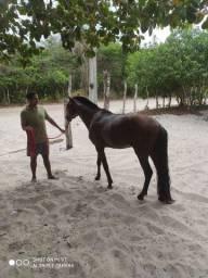 Cavalo de 5 anos