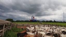 Título do anúncio: Fazenda à venda, por R$ 6.300.000 - Zona Rural - Presidente Médici/RO