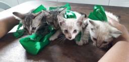 Doa-se esse lindos gatos (obs: machos).
