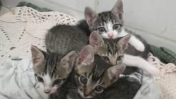 Gatinhas para adoção (entrego )