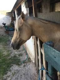 Passeio à Cavalo - Aluguel