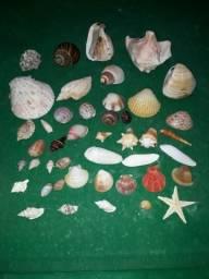 Coleção de Conchas