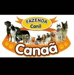 Canil Canaã- Estamos com promoções (27)997274395