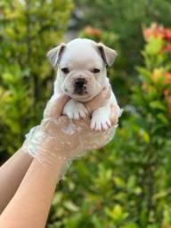 Bulldog Francês bebês, retirada física