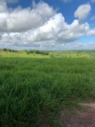 Fazenda em Cardeal da Silva- Bahia.