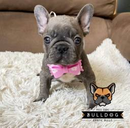 Bulldog frances femea