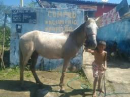 Vendo uma égua com um pordo e uma carroça e os arreios