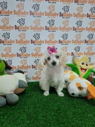 Poodle fêmea é no Da Madre Pet Shop