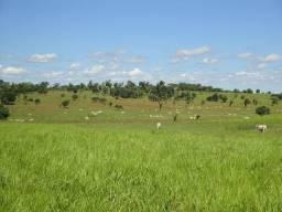 Fazenda para gado, caldas novas