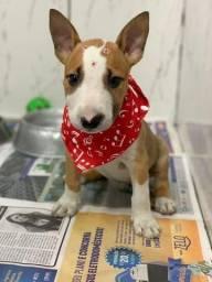 Bull Terrier, temos 6 lojas e 11 clínicas veterinárias próprias