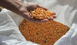 Título do anúncio: Vendo milho