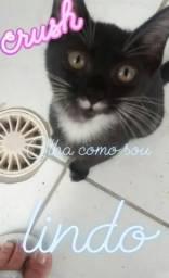 Lindo gatinho disponível para Adoção