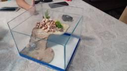 Aquaterrario para tartarugas