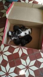Adoção de filhotes de gato