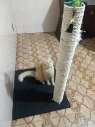Arranhador de gato novo