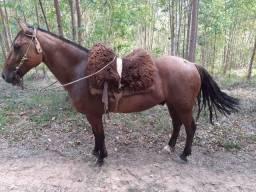 Vendo cavalo Gateado de barbada