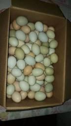 Vendo ovos de capoeira na barra dos coqueiros