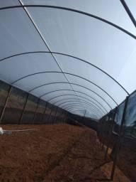 Estufa Agrícola - 7m x 15m x 2,5m - Parte Aérea Galvanizada - Mourões de Madeira