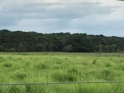 Fazenda Pronta Plana 310 Alqueires sendo 200 formados. Paraíso do Tocantins