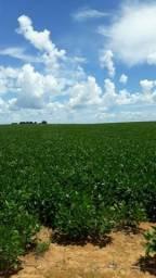 Fazenda 298 hectares - soja - mineiros - Goiás - rica em água