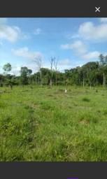 Fazenda com Campo Pasto Novo para Gado em Careiro BR-319 KM-62