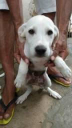 Vendo esse lindo cachorro de 3 meses