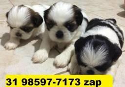 Canil Filhotes Cães Top BH Shihtzu Beagle Pug Poodle Maltês Yorkshire Lhasa
