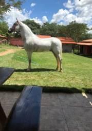 Cavalo mangalarga Machador registrado