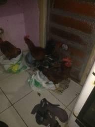 Vendo frangos top