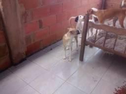 Doa-se Cachorros