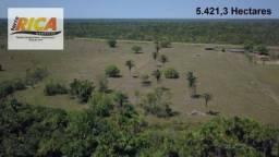 Fazenda com 5.421,3 Hectares as margens da BR 319 no município de Canutama-AM