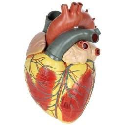 PVC Anatomia do coração- Medical Cardiaco (Tamanho: 12 x 12 x 25cm)