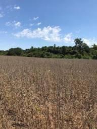 Fazenda Porangatu 100 alqueros