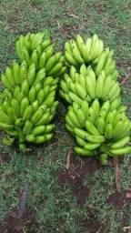 Caxo de banana maçã orgânico