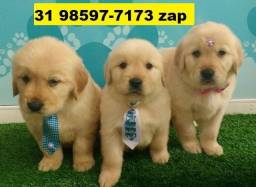 Canil Filhotes Cães Belíssimos BH Golden Pastor Rottweiler Labrador Akita Boxer