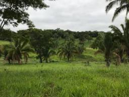 Fazenda 42 alqueires Cultura de Bacuri
