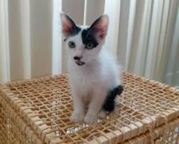 Lindo gatinho filhote para adoção responsavel