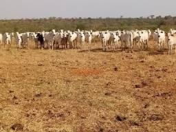Fazenda para Pecuaria com 1.100 hectares na beira no Lago do Manso