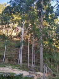 Fazenda TOP - Com eucalipto - Interior de SP