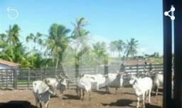Fazenda em Ceará Mirim