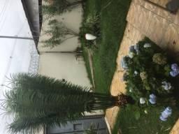 Excelente casa mobiliada 3/4 suíte bairro Ipanema Universidade