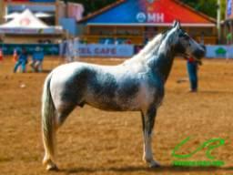 Coberturas de Cavalo Mangalarga Marchador/Pampa Homozigoto